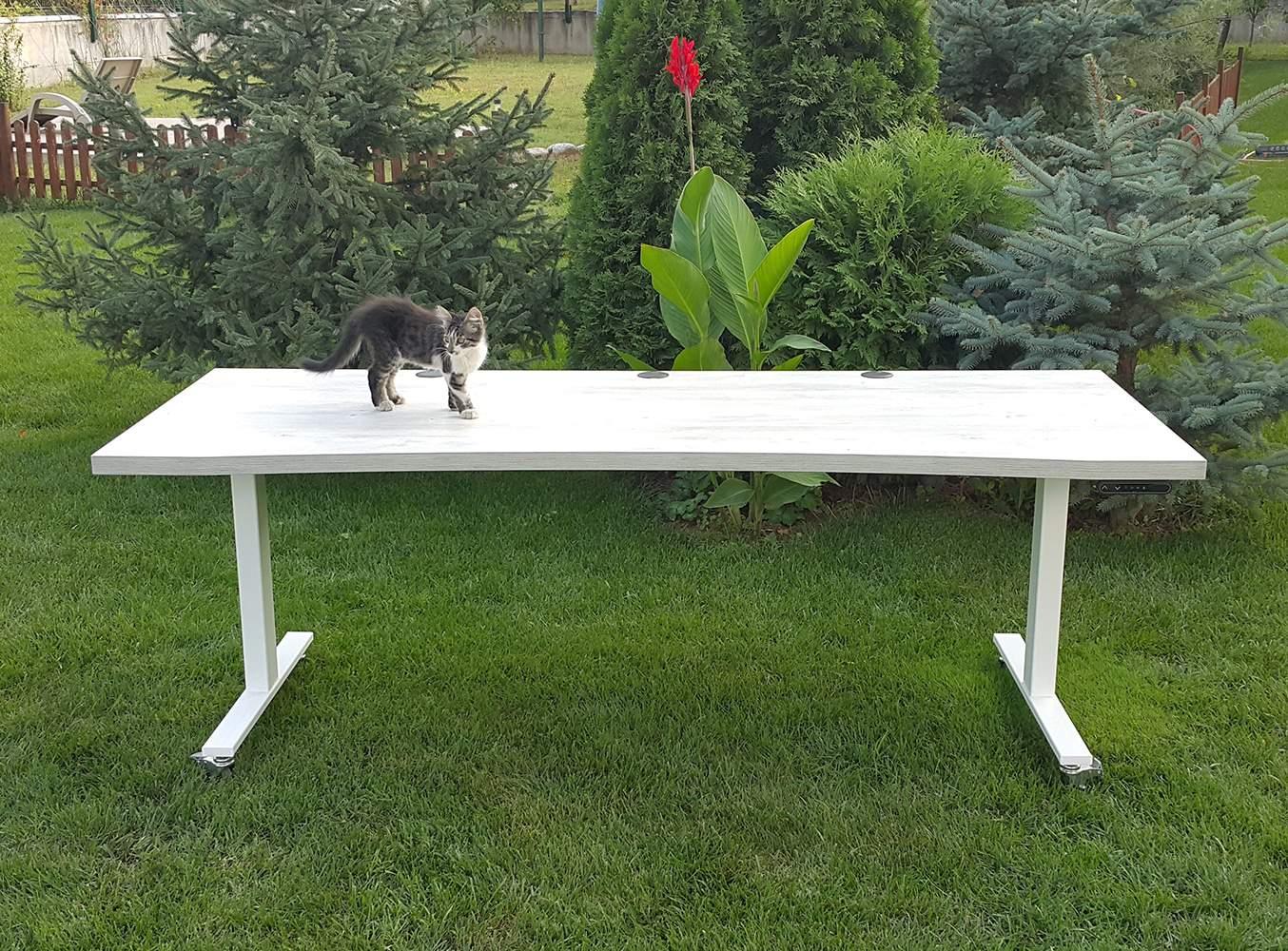 2 metres Height adjustable desk BulDesk Pro with cat on worktop